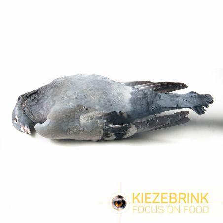 Pigeons X 10