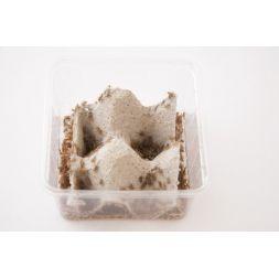 Grillon domestique T2 (Acheta domestica) Boite de +/- 150 à 1,17€ sur Barf-Food-France