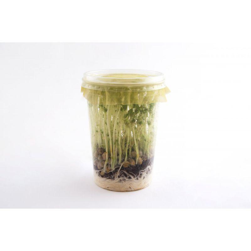 Puceron du haricot à 4,17€ sur Barf-Food-France