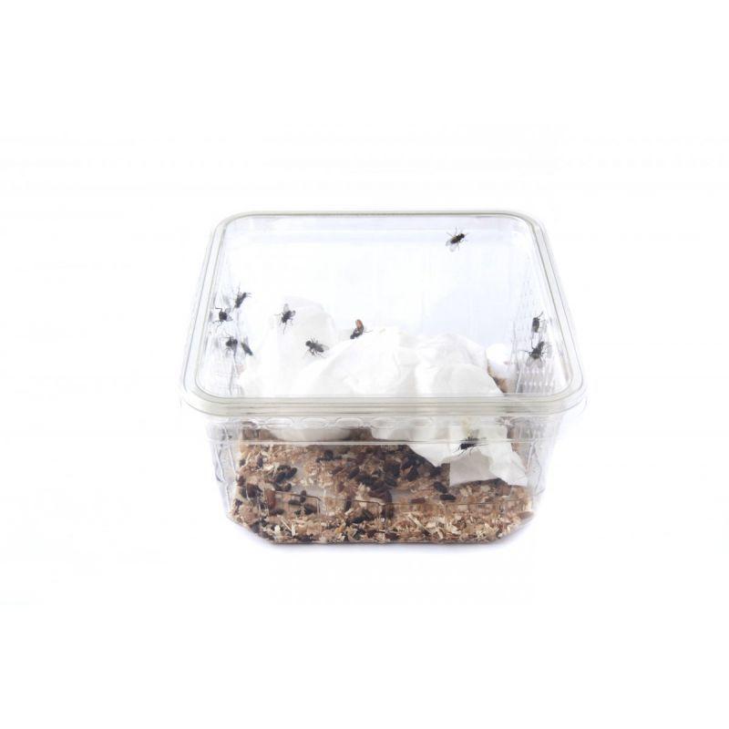 Mouche à ailes frisées à 2,33€ sur Barf-Food-France