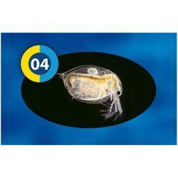 Blister Daphnies +/-95g à 1,08€ sur Barf-Food-France