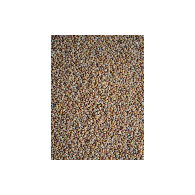 CAMELINA GOLD OF PLEASURE sac 25 kg à 75,63 € sur Barf-Food-France