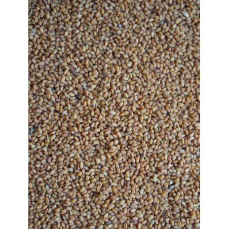 CAMELINA GOLD OF PLEASURE sac 25 kg