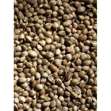 CHANVRE / CHENEVIS sac 0,7 kg