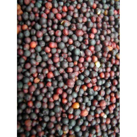 GRAINES DE NAVETTE sac 1 kg