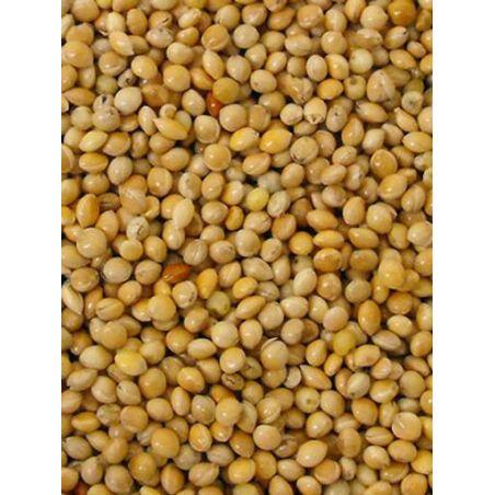 MILLET ROND JAUNE sac 1 kg