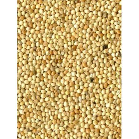 MILLET ROND BLANC sac 1 kg