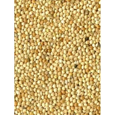 MILLET ROND BLANC sac 5 kg