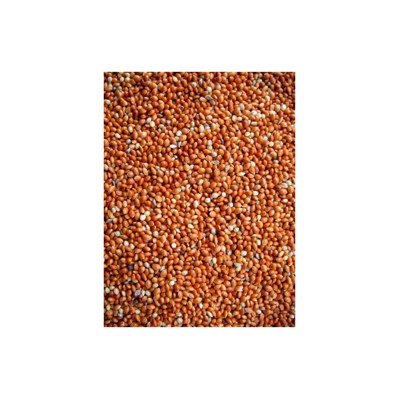 MILLET ROND ROUGE sac 5 kg à 7,63 € sur Barf-Food-France