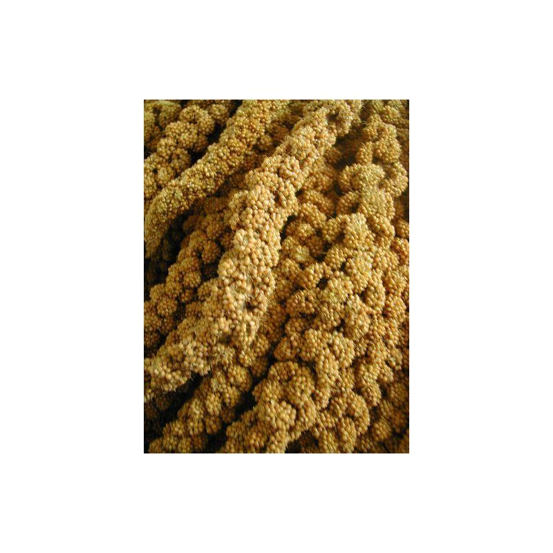MILLET EN GRAPPES FRANCAIS JAUNE sac 0,25 kg à 2,45€ sur Barf-Food-France