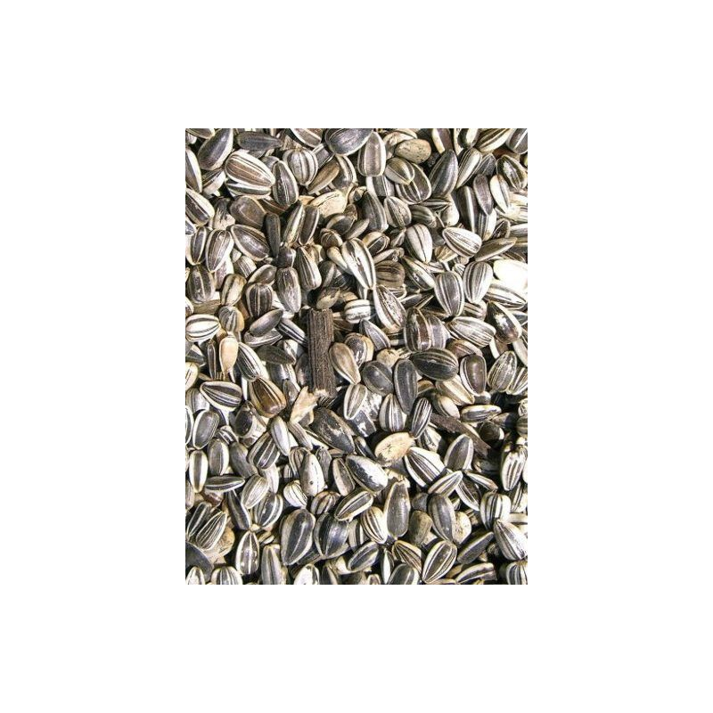 TOURNESOL STRIE LARGE MARICA/TOMA sac 15 kg à 28,63 € sur Barf-Food-France