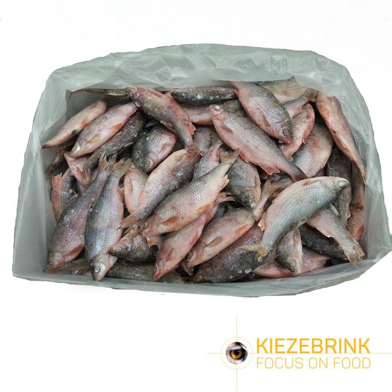 Gardon - Poisson d'eau douce 15-20cm IQF 15 Kg à 58,83 € sur Barf-Food-France