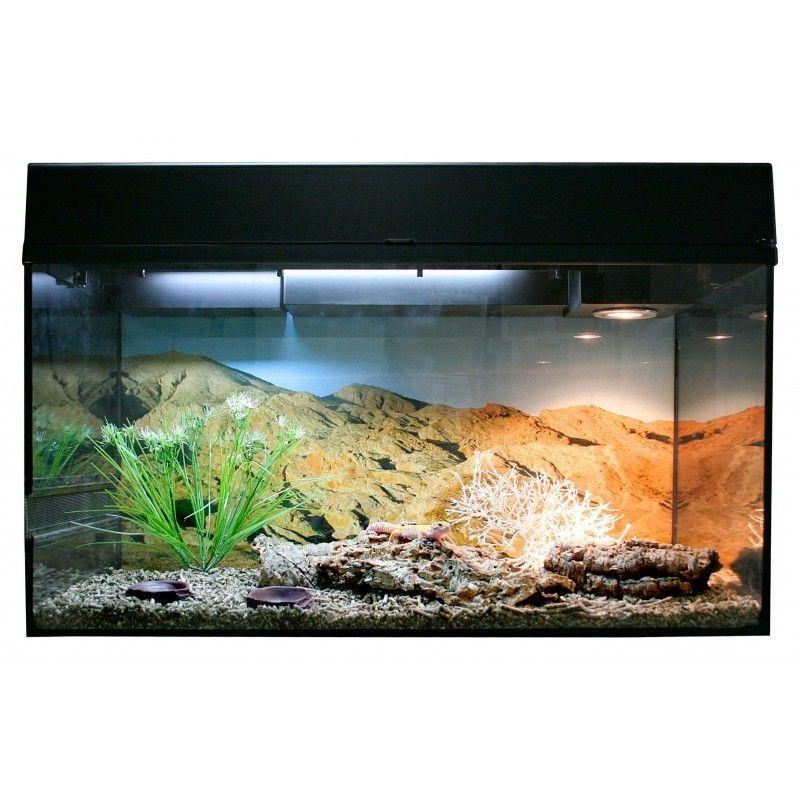 "Starter Kit 80 cm ""Gecko leopard"" noir à 232,50€ sur Barf-Food-France"