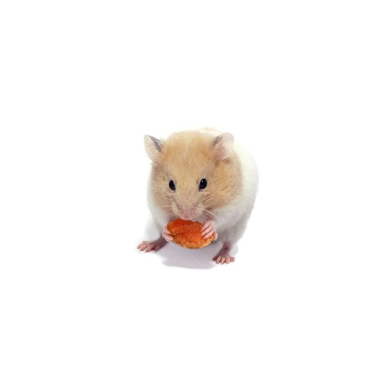 Hamster Doré vivant