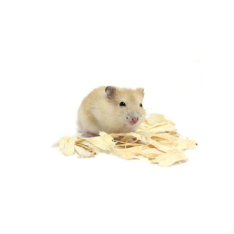"Hamster russe orange ""mandarine"" vivant"