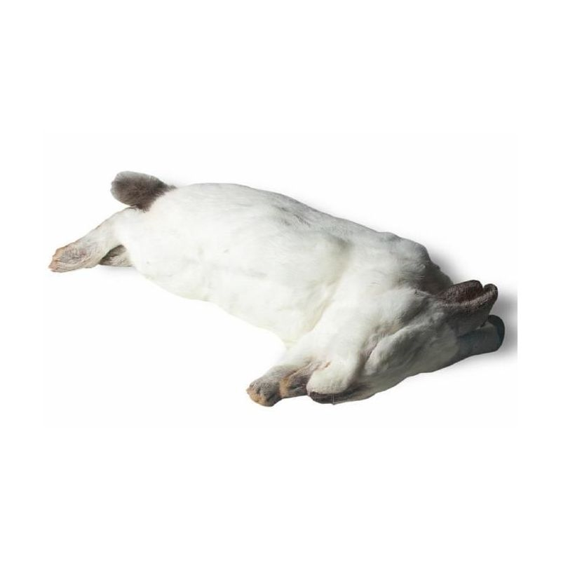Lapin congelé de 2.777 KG à 18,58€ sur Barf-Food-France
