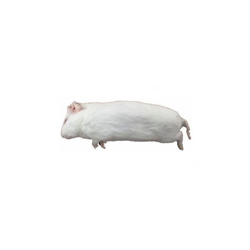 Carton de +/- 10 Kg Cochon d'inde congelés de +/- 250-500g - Livraison incluse à 99,17€ sur Barf-Food-France
