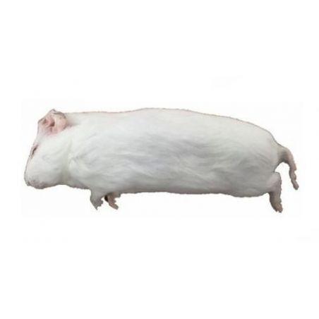 Carton de +/- 10 Kg Cochon d'inde congelés de + de 500g - Livraison incluse