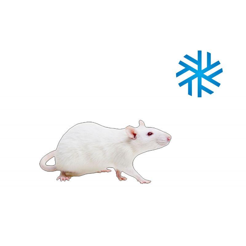 2 Rats X-large 250-350g congelés à 4,64€ sur Barf-Food-France